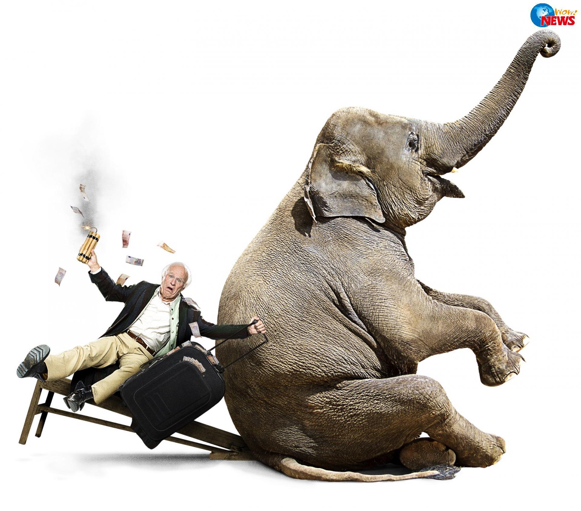 冒险岛黄金寺庙大象